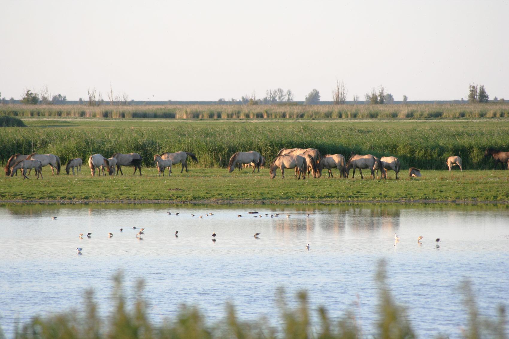 Rewilding London Walthamstow Wetlands